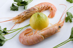 Pair of prawns stock image