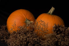 Pair of Pumpkins Stock Image