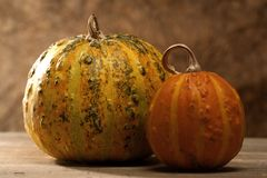 Pair of pumpkins Stock Photography