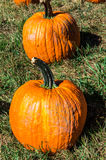 Pair of Pumpkins. In a field at Outhouse Orchard, North Salem, NY Royalty Free Stock Photography