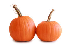 A pair of pumpkins isolated on white Stock Photography