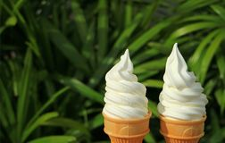 Pair of pure white milk soft serve ice cream cones in the sunlight, with blurred green foliage. In background Royalty Free Stock Photo