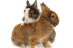 Pair of rabbits Stock Photo