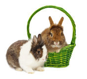 Pair of rabbits and green basket Royalty Free Stock Photography