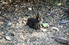 A pair of rabbits on the pebbles in cabbage leaves Royalty Free Stock Photos