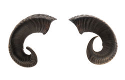 Pair of ram horns Stock Images