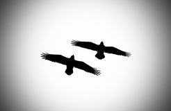Pair of ravens Royalty Free Stock Photography