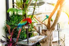 A pair of red-and-blue macaws Royalty Free Stock Photography
