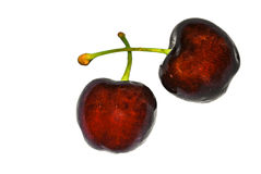 A pair of red Etna cherries Royalty Free Stock Image