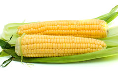 Pair of ripe corn ears. On the white background Royalty Free Stock Photography
