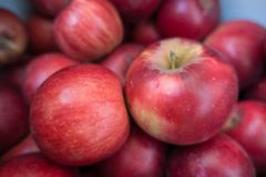 Pair of ripe red apples Jonathan cultivar royalty free stock photos
