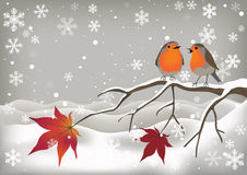 Pair of Robins Royalty Free Stock Photography