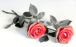 Pair of roses Royalty Free Stock Photos