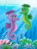 Pair of sea horses. Color illustration Stock Photography