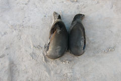 Pair of Sea Lion resting on the sand Stock Photos