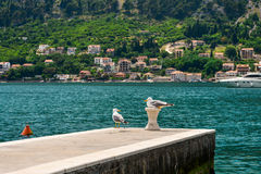 Pair of seagull Royalty Free Stock Photos