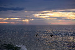 Pair of Seagulls Flying Over Ocean at Sunrise Stock Photography