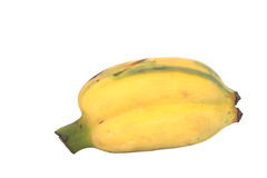 Pair of semi riped yellow banana isolated on white Royalty Free Stock Photo