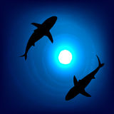 A pair of sharks in the depths of the sea. Vector background Stock Image