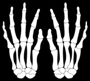 A Pair of Skelton Hands. Isolated on Black Stock Image
