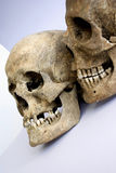 Pair of skulls Royalty Free Stock Photos