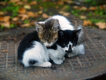 Pair of small cats. A pair of pitiable homeless small cats get warming together on fall autumn leaves Stock Images