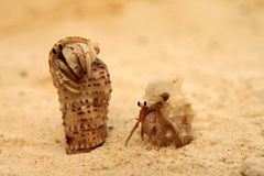 Pair of small crabs Stock Images