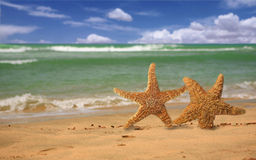 Pair of Starfish Humorously Walking Along the Beac Stock Image