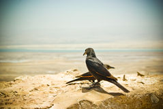 A pair of starlings in Masada Museum Stock Photos