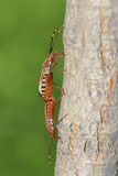 Pair of stink bug Stock Images