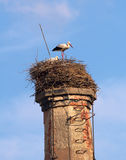 Pair of stork. A pair of stork in old nest at an old chimney Royalty Free Stock Image