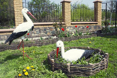 A pair of storks in the garden Royalty Free Stock Images