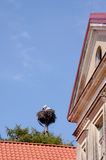 Pair storks in nest tree trunk building blue sky Royalty Free Stock Photography