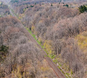 Pair of straight train tracks in forest. Royalty Free Stock Photography