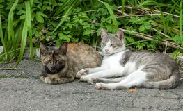Pair of stray street cats sleeping on sun. Two pussycat in garden stock photography
