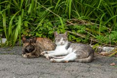 Pair of stray street cats sleeping on sun. Two pussycat resting in summer garden royalty free stock photos