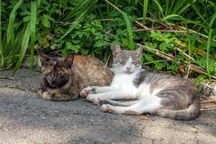 Pair of stray street cats sleeping on sun. Two pussycat in garden royalty free stock photos