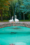A pair of swans. In a bridge over a large pond Royalty Free Stock Images