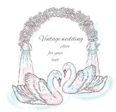 A pair of swans near the wedding arch. Stock Photography