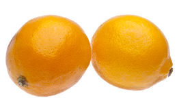 Pair of Sweet Meyer Lemons Royalty Free Stock Photography