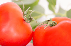 A Pair of Tomatoes Royalty Free Stock Photography
