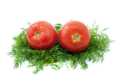 Pair of  tomatoes over some dill Royalty Free Stock Photography