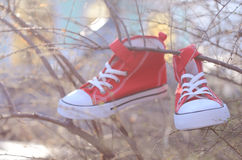 Pair of trainers hanging on tree branch Royalty Free Stock Photos