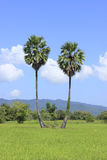 Pair of trees. Stock Image