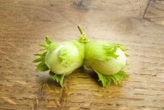 Pair of unripe hazelnuts Royalty Free Stock Photography