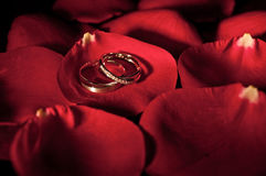A Pair of Wedding Ring on a Rose Petal. A pair of wedding ring sitting in the middle of a fresh red petal Royalty Free Stock Photo