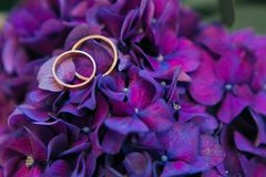 A pair of wedding rings flowers and petals of purple hydrangea close-up, macro.  Royalty Free Stock Photography
