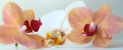 Pair of wedding splendid rings Stock Photography
