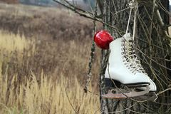 Pair of White Ice Skates hanging on the tree Stock Photos