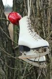 Pair of White Ice Skates hanging on the tree Stock Image